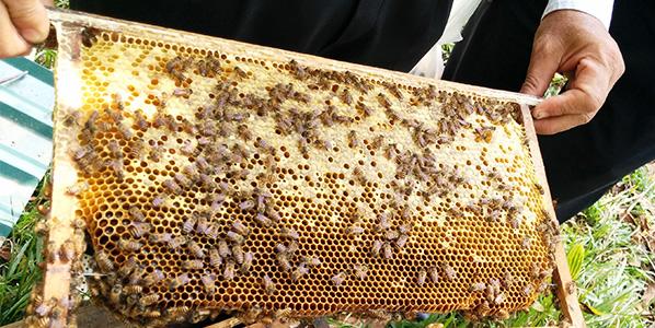ベトナムでの養蜂