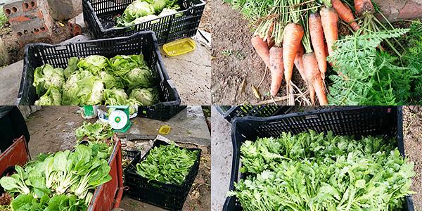 ベトナム農家支援で採れた緑黄色野菜